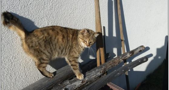 Katze, Trins(03/21)