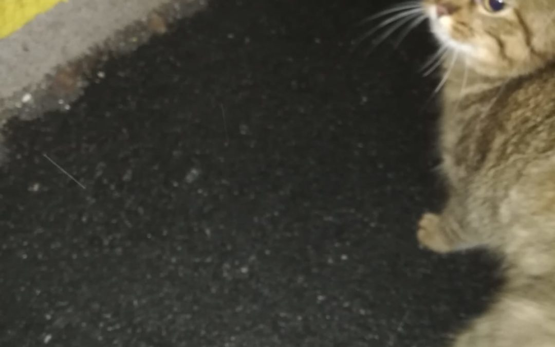 Katze, Langkampfen (3/21)