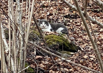 Katzen, Wörgl(03/21)