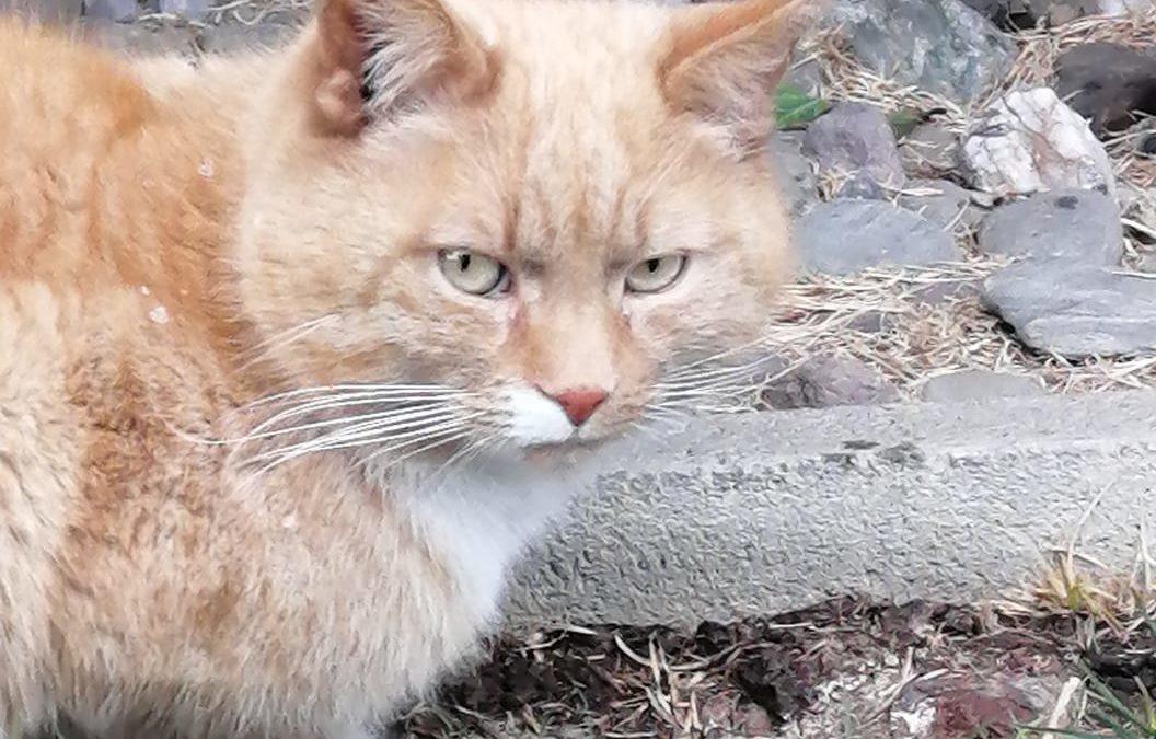 Katze, Wörgl (3/21)
