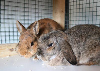 Kaninchenbande