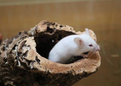 Mäusemädls
