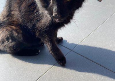 Katze, Angerberg (4/21)