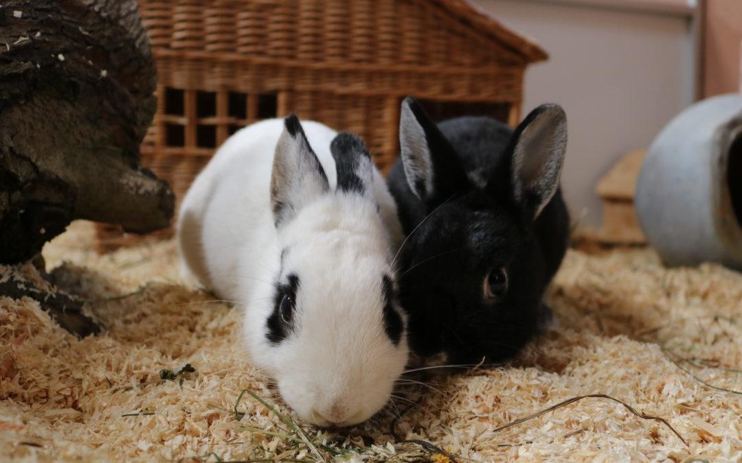 Marshmallow & Sam