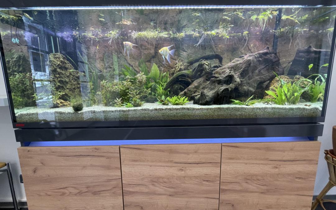 Das kann sich sehen lassen – unser neues Aquarium als Blickfang im Tierheim Mentlberg