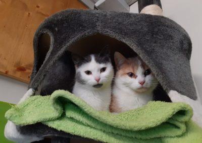 Moritz und Elisa