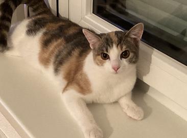 Mimi, Telfs (04/21)