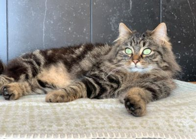 Katze, Wörgl (4/21)