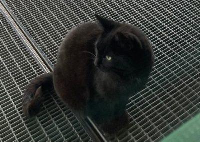 Katze, Tulfes (04/21)