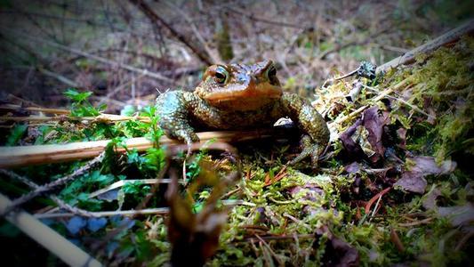 Petition zur umgehenden Errichtung eines Amphibienleitsystems an der L13 Sellrainstraße