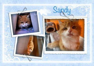 Sandy, Wörgl (4/21)