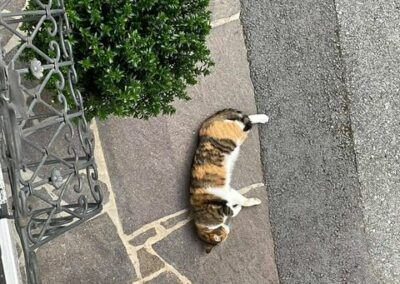 Katze, Angerberg (6/21)