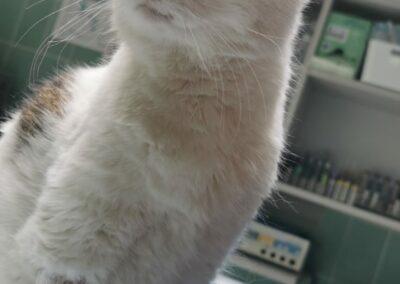 Katze, Ebbs (6/21)