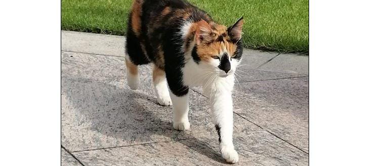 Katze, Vomperbach(06/21)