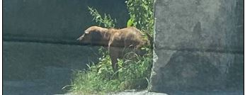 Sichthund, Zirl,  (06/21)