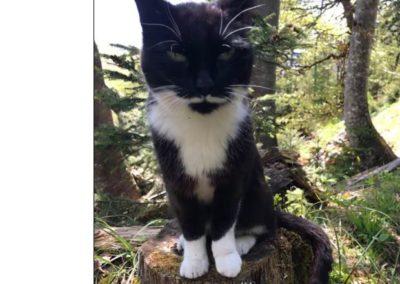 Sichtung Katze, Hintersteiner See(06/21)