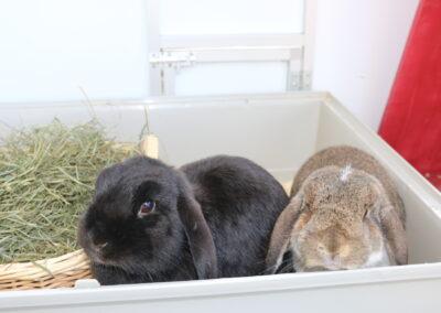 Schoko und Stella
