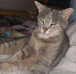 Katze, Waidring,  (07/21)