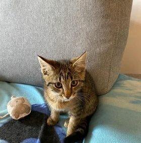 Katze, Brandenberg (8/21)