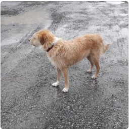 """Sichthund """"James"""", Sautens,  (08/21)"""