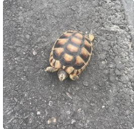 Fundschildkröte, Telfs,  (08/21)