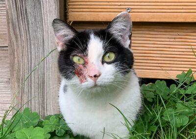Katze, Zell am Ziller (8/21)