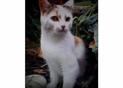 Daisy, Terfens,  (09/21)