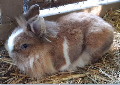 Kaninchen, Mariatal (9/21)
