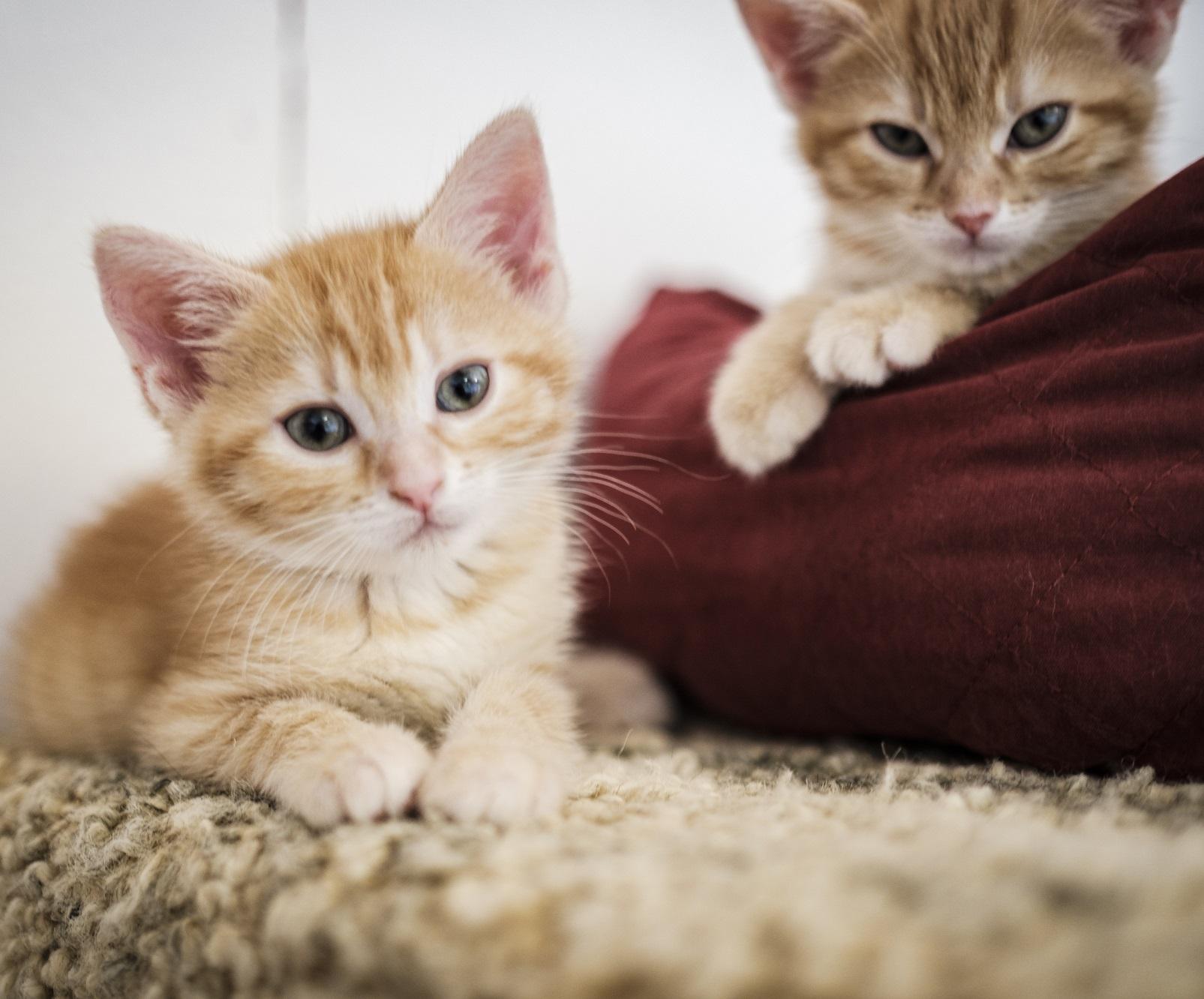 Katze adoptieren (Symbolbild)