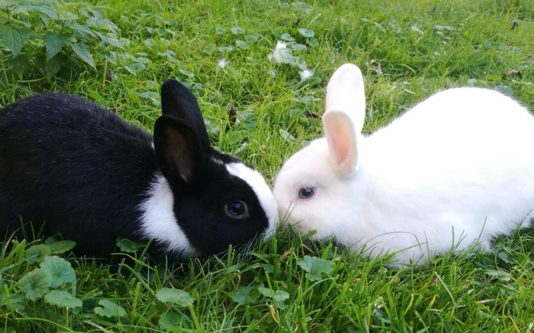 Welttierschutztag
